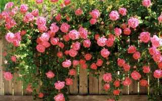 Микроэлементы и макроэлементы как выполнить внекорневую подкормку роз