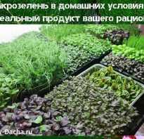 Выращивание микрозелезни дома