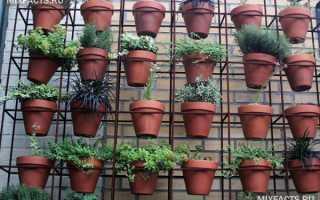 Виды подставок для комнатных растений