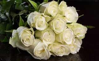 Какого цвета бывают розы, варианты окраски