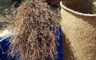 У каких растений мочковатая корневая система примеры