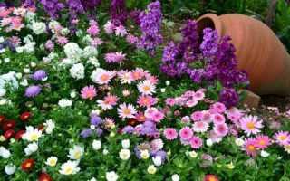 Чем подкормить цветы