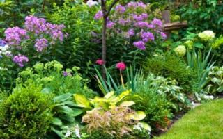 Схемы клумб непрерывного цветения с описанием цветов