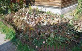 Основные правила укрытия роз в сибири