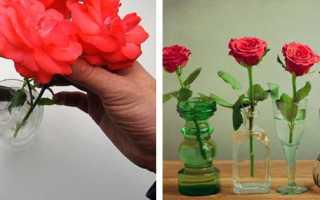 В какой воде должны стоять розы
