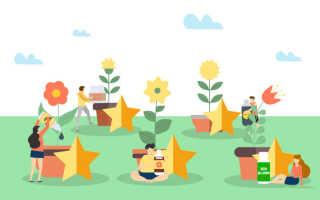 Пять лучших средств для цветения комнатных растений