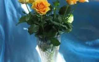Какие сорта виды роз стоят дольше всего