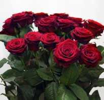 Как выбрать свежие розы