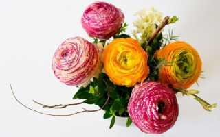 Цветы для фотосессии