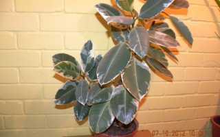 Ярлычки для комнатных растений в детском саду