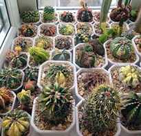 Земля для кактусов состав