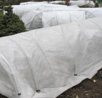 Как правильно укрыть штамбовую розу на зиму