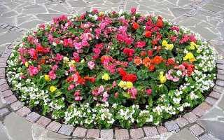 Чем миксбордер отличается от других видов цветников