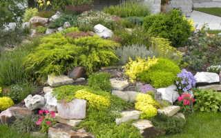 Гвоздика травянка в ландшафтном дизайне фото