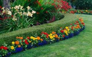 Обустройства клумб с лилиями