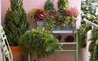 Морозоустойчивые растения для балкона