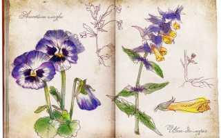 Цветы и травы