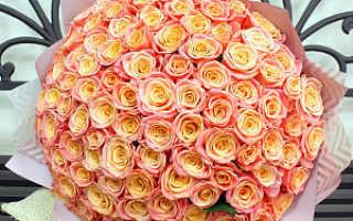 100 роз фото