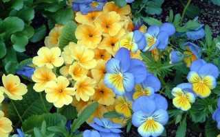 Комнатные цветы по знакам зодиака с фото