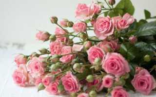Несколько способов, как продлить жизнь роз из букета