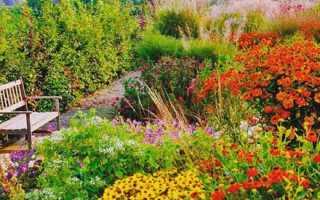 Многолетники цветущие осенью фото с названиями