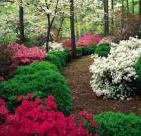 Кустарники срозовыми цветами