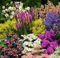 Многолетники для клумб и цветников