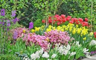 Многолетние луковичные садовые цветы фото и названия